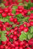 Fresh, crisp radishes on the weekly market. Can be used as background Stock Image
