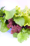 Fresh and crispy bouquet of greens Royalty Free Stock Image