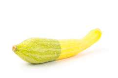 Fresh crookneck squash Royalty Free Stock Photo
