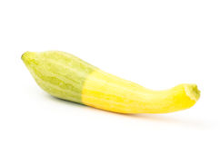 Fresh crookneck squash Royalty Free Stock Photography