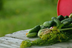 Fresh crop of cucumbers. On a table Stock Images