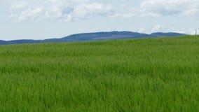 Fresh Crop wind - 4K stock footage