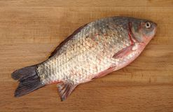 Fresh crucian Royalty Free Stock Photography