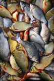 Fresh crucian  fish on a shop counter. Crucian Royalty Free Stock Image