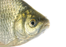 Fresh crucian  isolated on the white Royalty Free Stock Photos