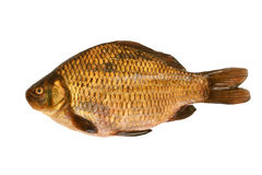 Fresh crucian Stock Images