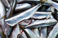 Fresh crude anchovies. Prepared for processing Royalty Free Stock Image
