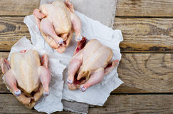 Fresh, crude farmer chicken Stock Images