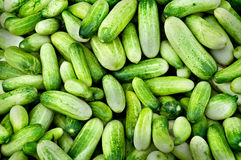 Fresh cucumber Royalty Free Stock Photos