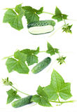 Fresh cucumber Stock Image