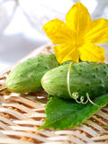 Fresh cucumber. S with flower and leaves Royalty Free Stock Photo