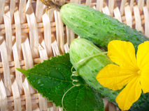 Fresh cucumber. S with flower and leaves Stock Photo