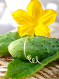 Fresh cucumber. S with flower and leaves Stock Image