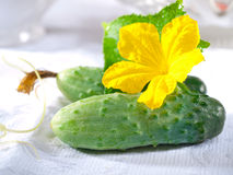 Fresh cucumber. S with flower and leaves Stock Images