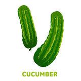 Cucumber flat illustration. Fresh cucumber flat illustration. Cucumber for farm market, vegetarian salad recipe design. Cucumber badges, labels. Vector Stock Photos