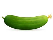 Fresh cucumber fruit close up Stock Photography