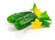 Fresh cucumber fruits with green leaves Royalty Free Stock Photo