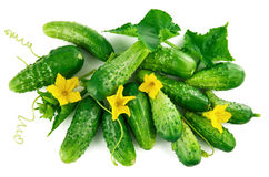 Fresh cucumber top view green leaves flowers Stock Photography