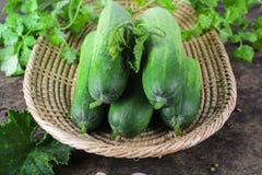 Fresh cucumber on white background Stock Image