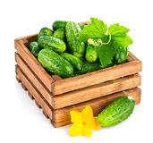 Fresh cucumber in wooden box with green leaf and flower Royalty Free Stock Photography