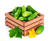 Fresh cucumber in wooden box with green leaf and flower Royalty Free Stock Photos