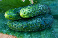 Fresh cucumber. On wooden plate with green leaf royalty free stock photo