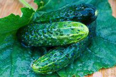 Fresh cucumber. On wooden plate with green leaf royalty free stock image