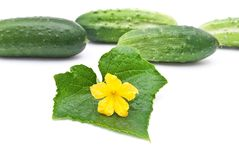Fresh cucumbers Royalty Free Stock Images