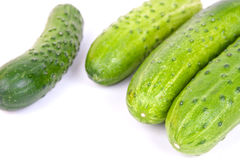 Fresh cucumbers. Some fresh cucumbers on white background in studio Stock Photo