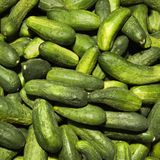 Fresh cucumbers. Stock Photos