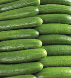 Fresh cucumbers Royalty Free Stock Image