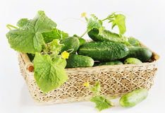 Fresh cucumbers in a basket Royalty Free Stock Photo