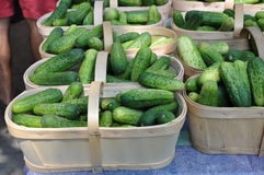 Fresh cucumbers. In basket for sale Stock Photography