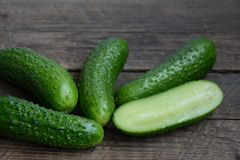 Fresh cucumbers from a bed Royalty Free Stock Photography
