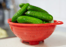 Fresh cucumbers in a bowl Royalty Free Stock Photo