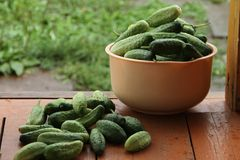 Fresh cucumbers in a bowl and wooden boards. Day in the rain in the background Stock Images