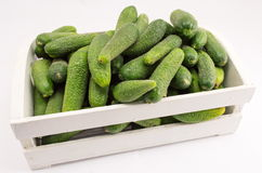 Fresh cucumbers in box prepared for jar. Fresh cucumbers in a wooden box putting in a jar Stock Images