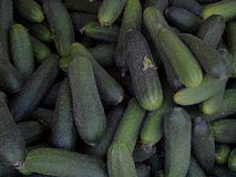 Fresh cucumbers collected on the farm. Close-up Royalty Free Stock Images