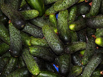 Fresh cucumbers collected on the farm. Close-up Royalty Free Stock Photos