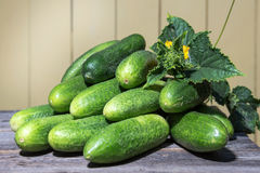 Fresh cucumbers collected in the garden Stock Image