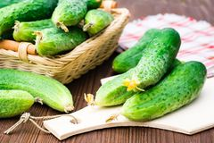 Fresh cucumbers on the cutting board and in a basket. On a wooden table Royalty Free Stock Images