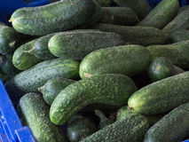 Fresh cucumbers on farmers market. Stock Photography