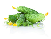 Fresh cucumbers with flowers and leaves Stock Photography