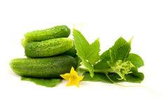 Fresh cucumbers fruits Royalty Free Stock Image