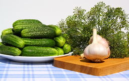 Fresh cucumbers, garlic and dill on a table. Stock Images