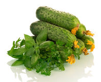 Fresh cucumbers with herbs Royalty Free Stock Image