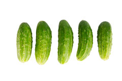 Fresh cucumbers isolated on white background Stock Photography