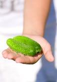 Fresh cucumbers in kids hand Stock Photos
