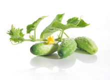 Fresh cucumbers with leaves. And flower on a branch Stock Images