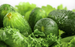 Fresh cucumbers and lettuce close up Royalty Free Stock Images